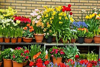OASE: Silk lykkes du med hageplanting i potter. COLOURBOX4134932.jpg