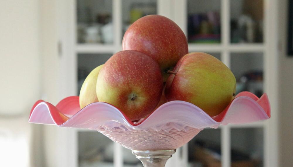 HUMLENS FORTJENESTE: Humlen har en helt avgjørende betydning for pollineringen av frukttrær. Uten humler, lite frukt. (FOTO: Alexander Berg jr.)