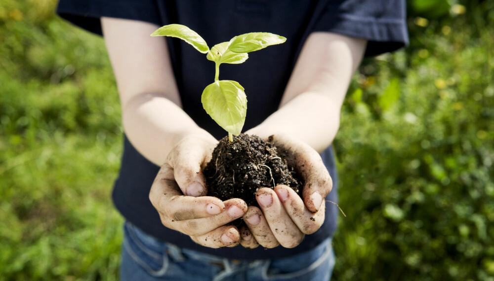 LAGE HAGE: En vanlig nybegynnerfeil hvorvidt gjelder å lage hage, er å begynne i helt feil ende. God og nok planlegging er helt essensielt for å oppnå drømmehagen.