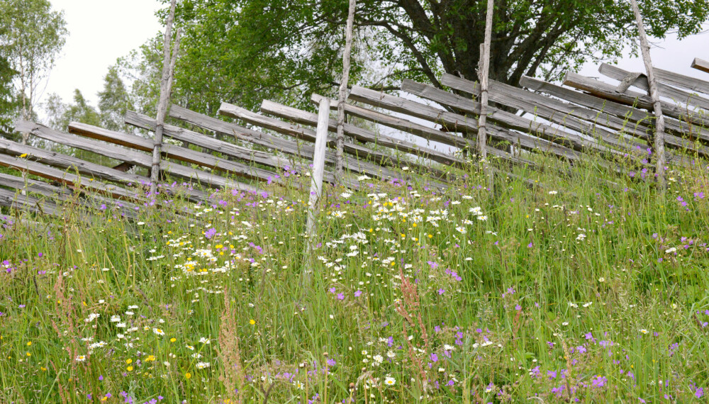 VAKKERT: Lag deg en blomstereng i hagen og ta vare på kulturarven.