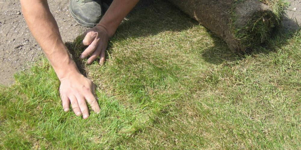 PASS PÅ SKJØTENE: Det er viktig å legge rullene helt tett inntil hverandre, men ikke oppå. Hvis det blir store gliper mellom rullene kan det oppstå tørkeskader her.