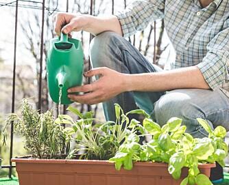 VANNING: Har du en liten kjøkkenhage på terrassen, er det viktig å vanne ofte.
