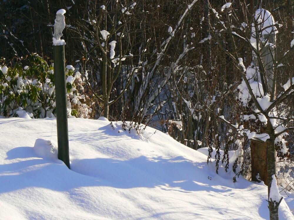 WINTER WONDERLAND: Om vinteren får plantene i hagen hvile. Men noen vekster, også spiselige, trosser både vinterkulden og snøen.