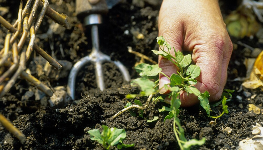 I JORDA: Ikke bare er luking og planting nødvendig, det kan gi oss et mer harmonisk liv.