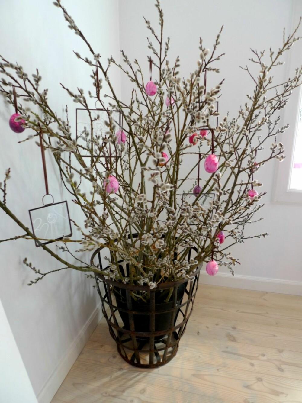 DEKORATIVT: Klipp av greiner med gåsunger og ta de inn i stuen. Det blir veldig dekorativt med litt pynt og hjemmemalte påskeegg.