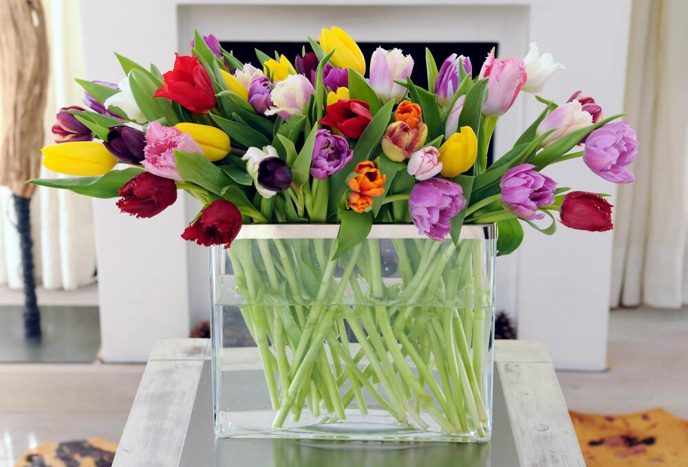 KJEMPEBUKETT: En enorm bukett med fargerike tulipaner kan lyse opp et helt rom.
