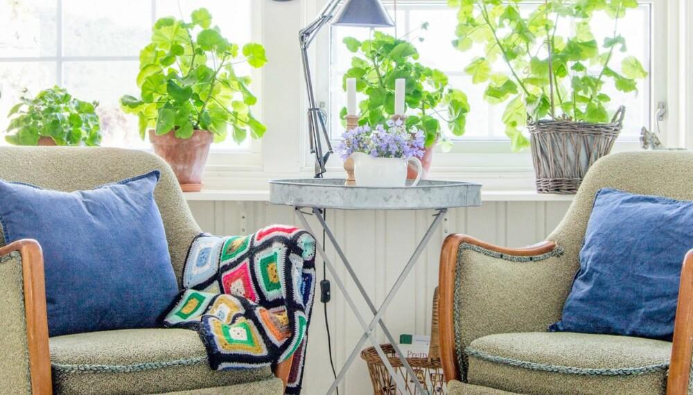 FARGERIKT: Pelargonier i vinduskarmen og smårutete vinduer gir glassverandafølelse innerst i stua. Lenestolene kommer fra Fretex, og den svarte lampa er kjøpt på Jysk.