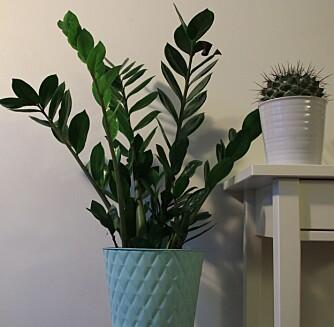 INN: Vi vil stadig ha store, grønne planter i hus.
