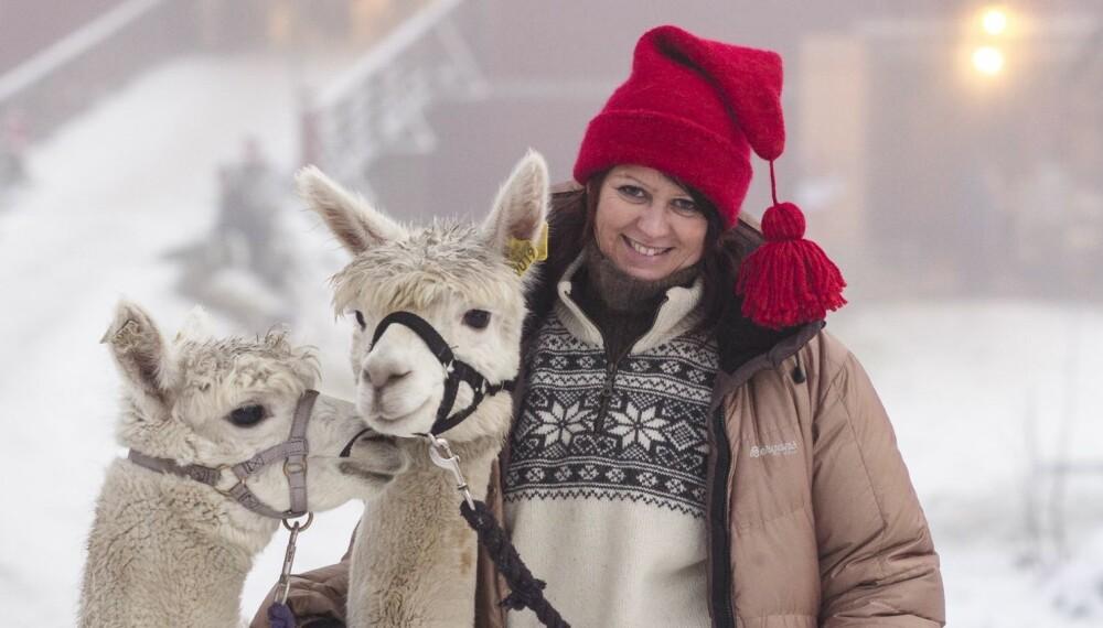 FAST INVENTAR: Alpakkaer fra Killingmo gård er fast inventar på julemarkedet, til særlig barnas store begeistring.