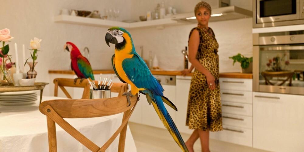 ORIGINALT: Papegøyer og damer i leopardkjoler er noen av de viktigste ingrediensene i denne boligstylingen.