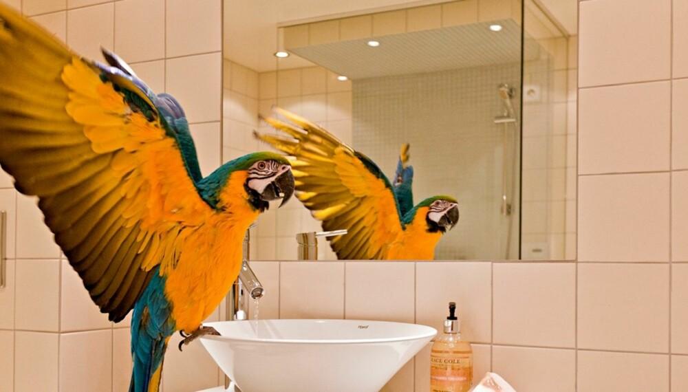 SKILLER SEG UT: Sprell levende papegøyer er noe av det som skal vekke oppmerksomhet i denne boligannonsen.