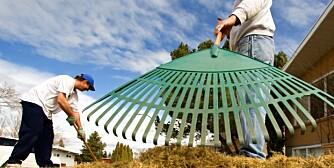 DUGNAD: Våren er tid for dugnad, men det er tvilsomt om borettslaget eller boligsameiet kan pålegge deg å delta.