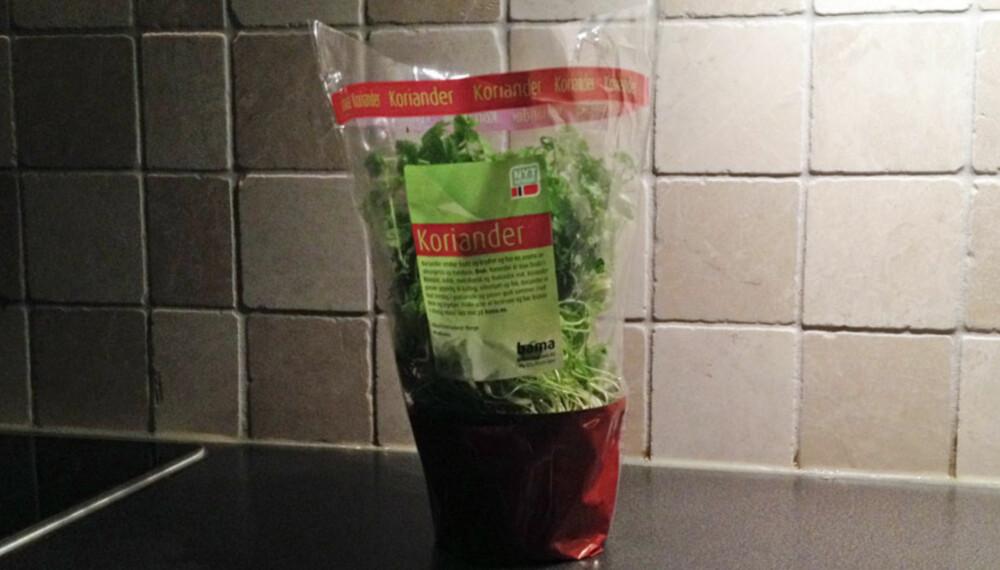 FEIL: Lar du urtene stå sånn på kjøkkenbenken? Da holder de ikke lenge.