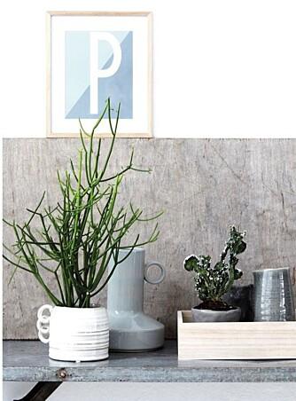 GRØNT ER SKJØNT: Dekorer med planter inne. FOTO: House Doctor
