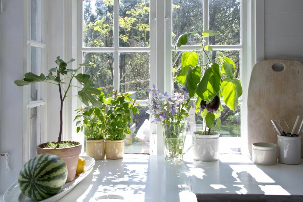 GRØNT: Grønt er skjønt i vinduskarmen.