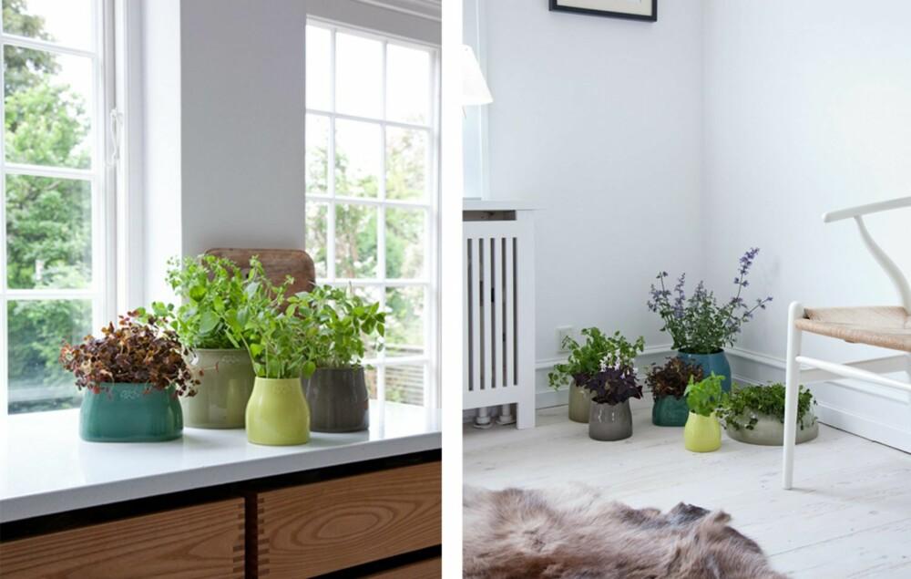 BOTANICA: Kähler er en av produsentene som har kastet seg over den botaniske trenden med produktserien Botanica. Serien består av vakre vaser i ulke former og tidsriktige, støvete farger.