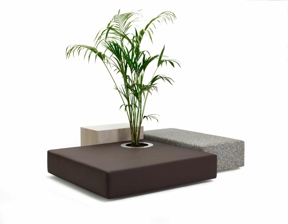 LITEN ØY: Den svenske møbelprodusenten Offecct har en tidsriktig kolleksjon som heter Oasis. Under kolleksjonen Oasis er det flere serier, blant annet den som heter Green islands. Serien består av lave sittemøbler med integrerte planter. Produsenten ønsker å gi en følelse av å sitte under et tre.