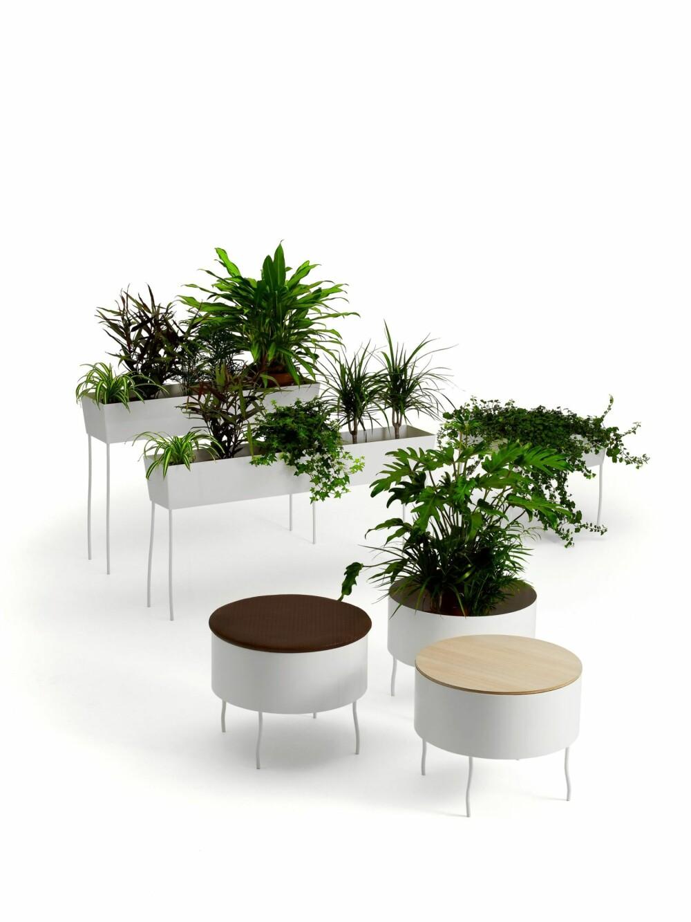 SUNNE PLANTER: Med store blomsterbed og potter formet som møbler ønsker Offecct å integrere planter i interiøret, og på denne måten skape et sunnere og bedre inneklima.