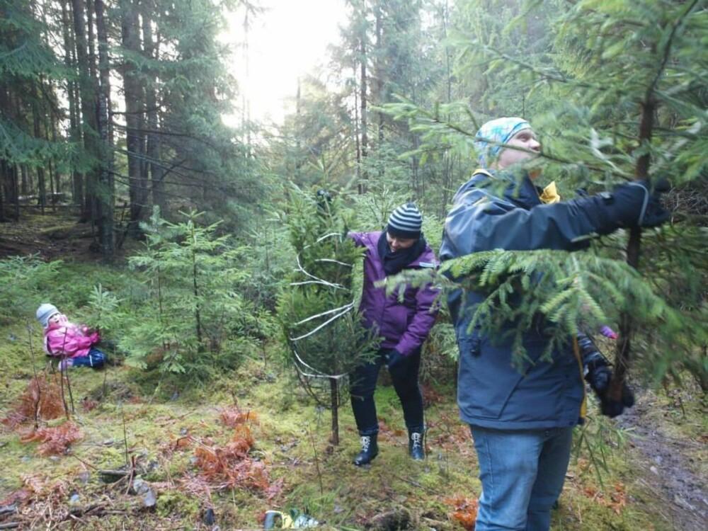 ETT TIL HVER: Lille Mina, mamma June og familievennen Brett fra New Zealand finner trær i alle størrelser hos skogeier Bjoner.