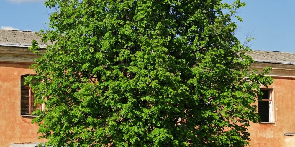 IRRITASJONSMOMENT: Trær som blokkerer utsikten er på topp blant ting som irriterer oss med naboen