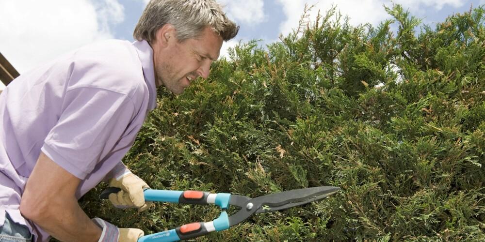 FRISTENDE: Å fjerne naboens hekk på egen hånd kan fort koste deg store summer.