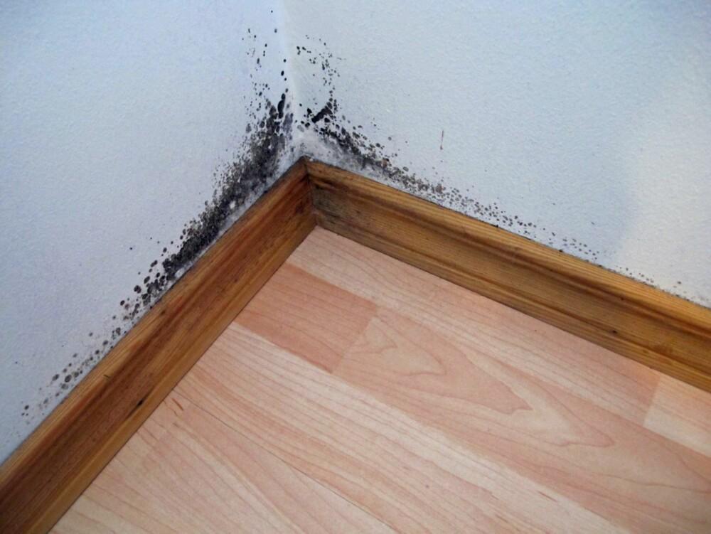 FUKTSKADE: Kondens og mugg i hjørnet i et soverom. For liten utlufting i leiligheten.