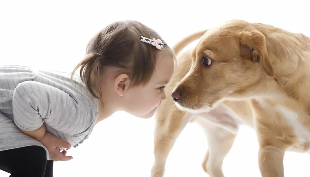 DEMPENDE SIGNALER: For å ha en harmonisk familie med barn og hund er det viktig å lese hundens signaler. Denne jenta oppfører seg for eksempel svært truende ved å stirre hunden inn i øynene. Hunden legger ørene bakover og sperrer opp øynene for å dempe situasjonen.
