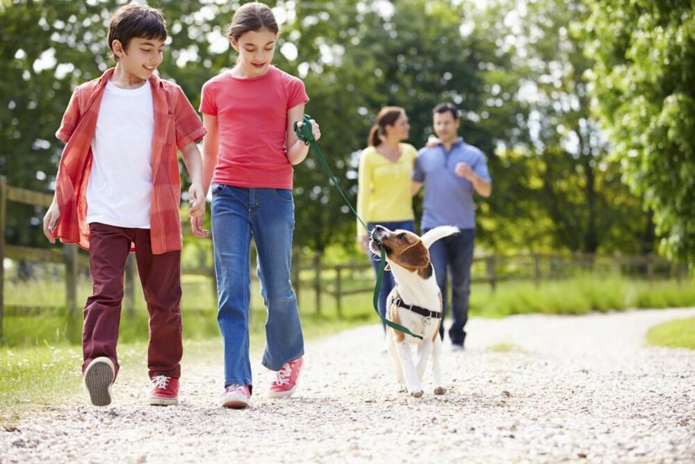 HARMONISK: Hvis du og barna dine lærer dere å lese hundens signaler, vil det ikke oppstå farlige situasjoner.