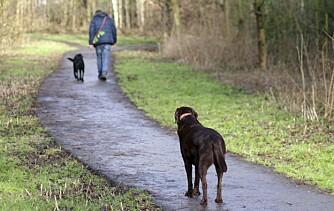 FRYSE: Når du vil ha med deg hunden og den bare stopper opp kan det hende den prøver å dempe maset ditt, ikke være vrang.