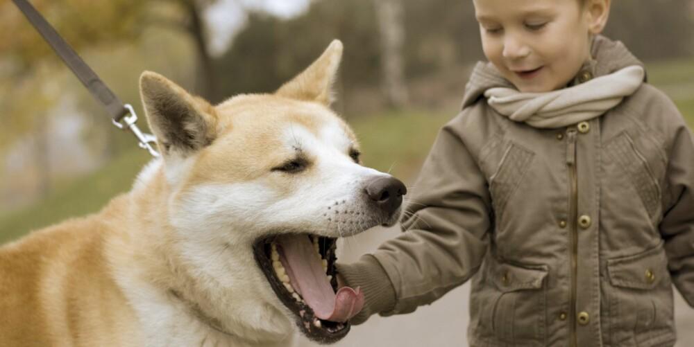DEMPET SIGNAL: Det er ikke alle signaler hunden gir som betyr det du tror. Denne hunden gjesper for eksmpel fordi den er usikker på gutten.