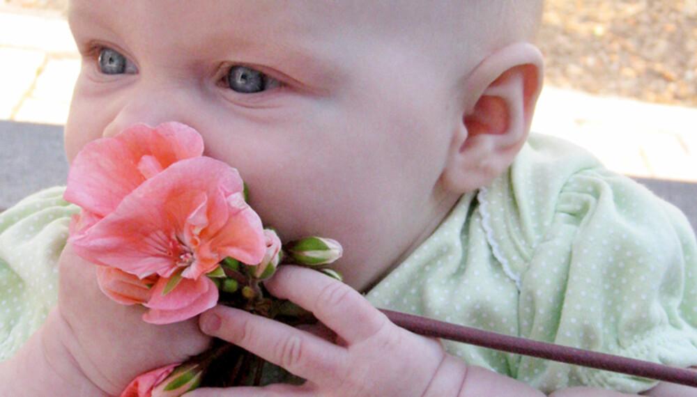 IKKE SPIS BLOMSTER: Noen blomster er giftige. Hvis barnet har spist på en blomst så sjekk med giftinformasjonen.