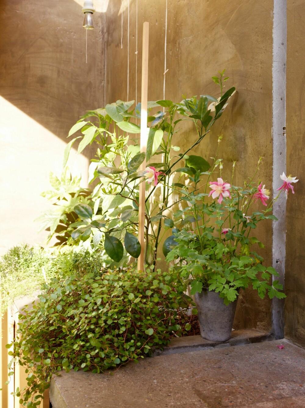 PLANTEKROK: Helt i enden av tilbygget har familien funnet plass for å dyrke frem uvanlige og vanlige vekster som siden settes ut i potter og bed.