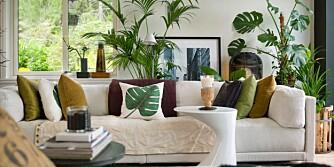 HOT MED PLANTER: Du kan også lykkes på grøntarenaen, spesielt om du satser på de mer røffe plantene som tåler litt.