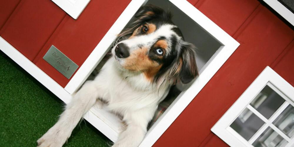LUKSUSBOLIG: Er hunden din av den tradisjonelle typen, vil den nok trives i dette huset.