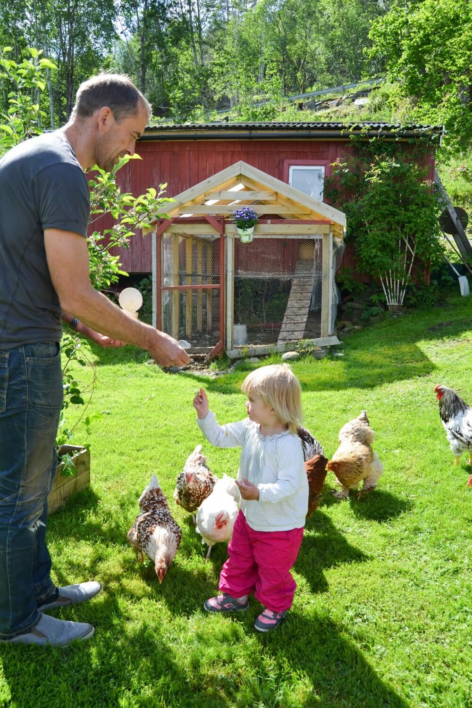 PASSER PÅ: Selma er flink til å mate hønene som spankulerer fritt omkring i hagen. Litt går nok inn i hennes egen munn også.