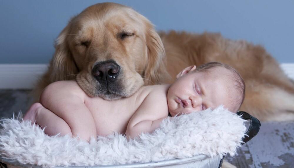 SUPERSØTT: Babyer og hunder er noe av det søteste som finnes, og vi har samlet noen skjønne videoer med begge deler.