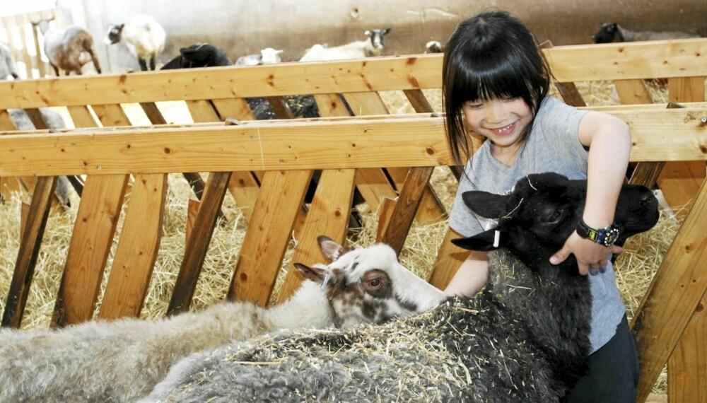 Det er ikke bare ville rovdyr i Nordens Ark. Her kan også Mina (7) og andre barn få oppleve gamle, nordiske husdyrraser på svært nært hold.