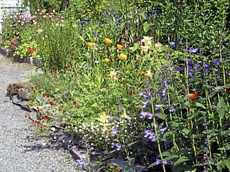EVENTYRLIG : Den bevisste miks av  innførte og lokale vekster gir hagen i Nordkjosbotn en eventrylig fargeprakt. Bed og hekker organiseres mange steder med dekkbark og knotteplast.