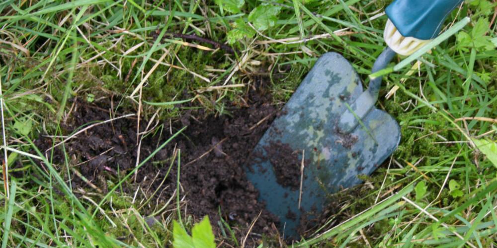 IKKE TA TOPPEN: Laboratoriet som analyserer jordprøvene, anbefaler å skrape vekk det øverste laget jord og ta prøven litt nede i bakken.