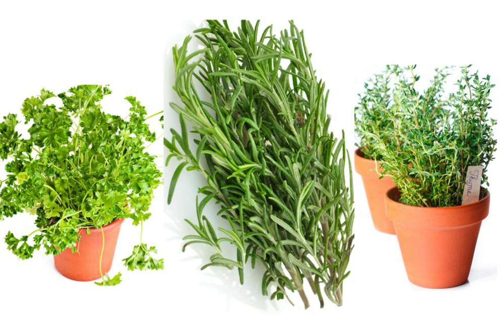 ANVENDELIGE: Persille, rosmarin og timian er også vanlige urter å dyrke selv.