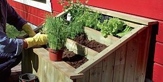 Tre etasjer: Nå er det tid for å bygge en egen minihage. I en slik urtehage kan du få plass til både urter og salat.