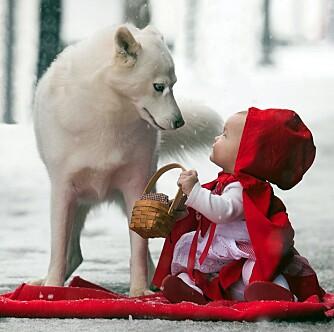 RØDHETTE OG ULVEN: Maddie i møte med ulven, en kjent scene fra Lille Rødhette.