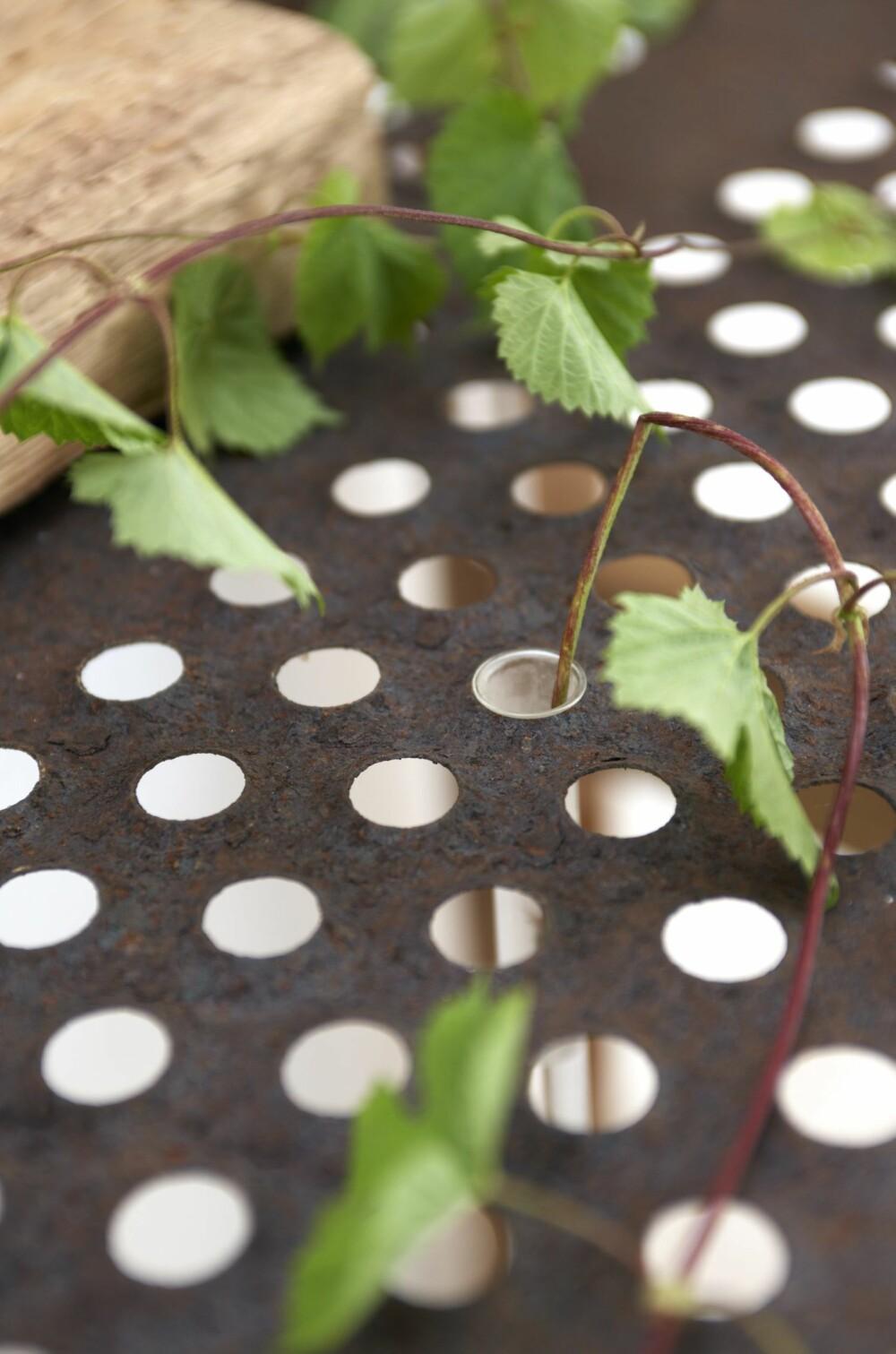 SMART BORDPLATE: Sofia har laget en bordplate av en sil som før satt på en skurtresker. I hullene setter hun reagensrør, og vips, har  hun små vaser.