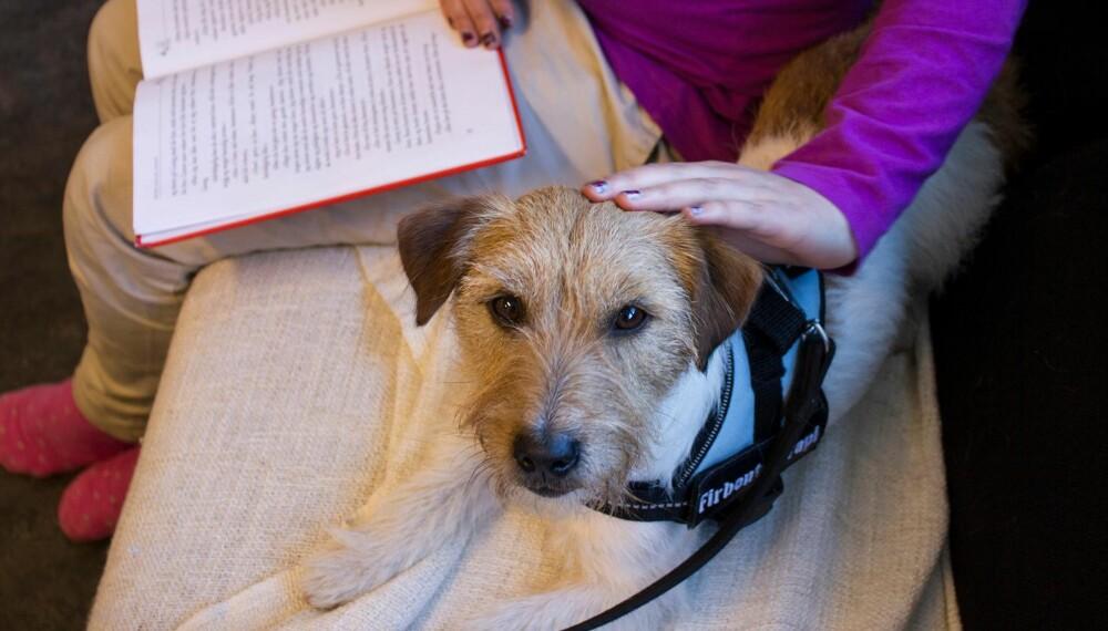GOD STØTTE: Lesehunder gir barn bedre selvtillit og leseforståelse. Hunden Lillegutt er en god støtte når man skal lese høyt.