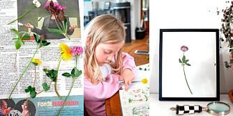 PRESS BLOMSTER: Skal du innom en bokhandel før ferien? Kjøp med deg en blomsterbok og gå på skattejakt med barna i ferien.