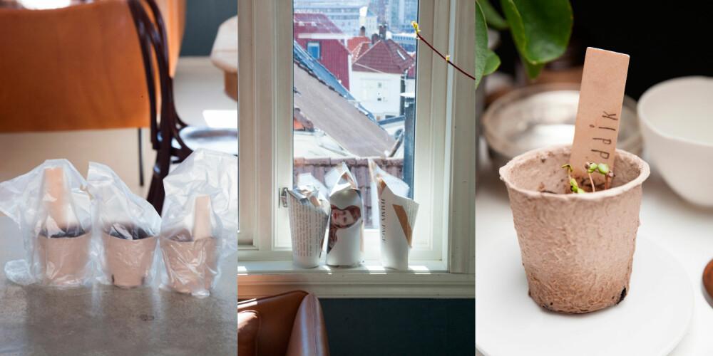SÅTID: Noen plastposer, en avis og en ispinne - og vips har du et lite gartneri i vinduskarmen.