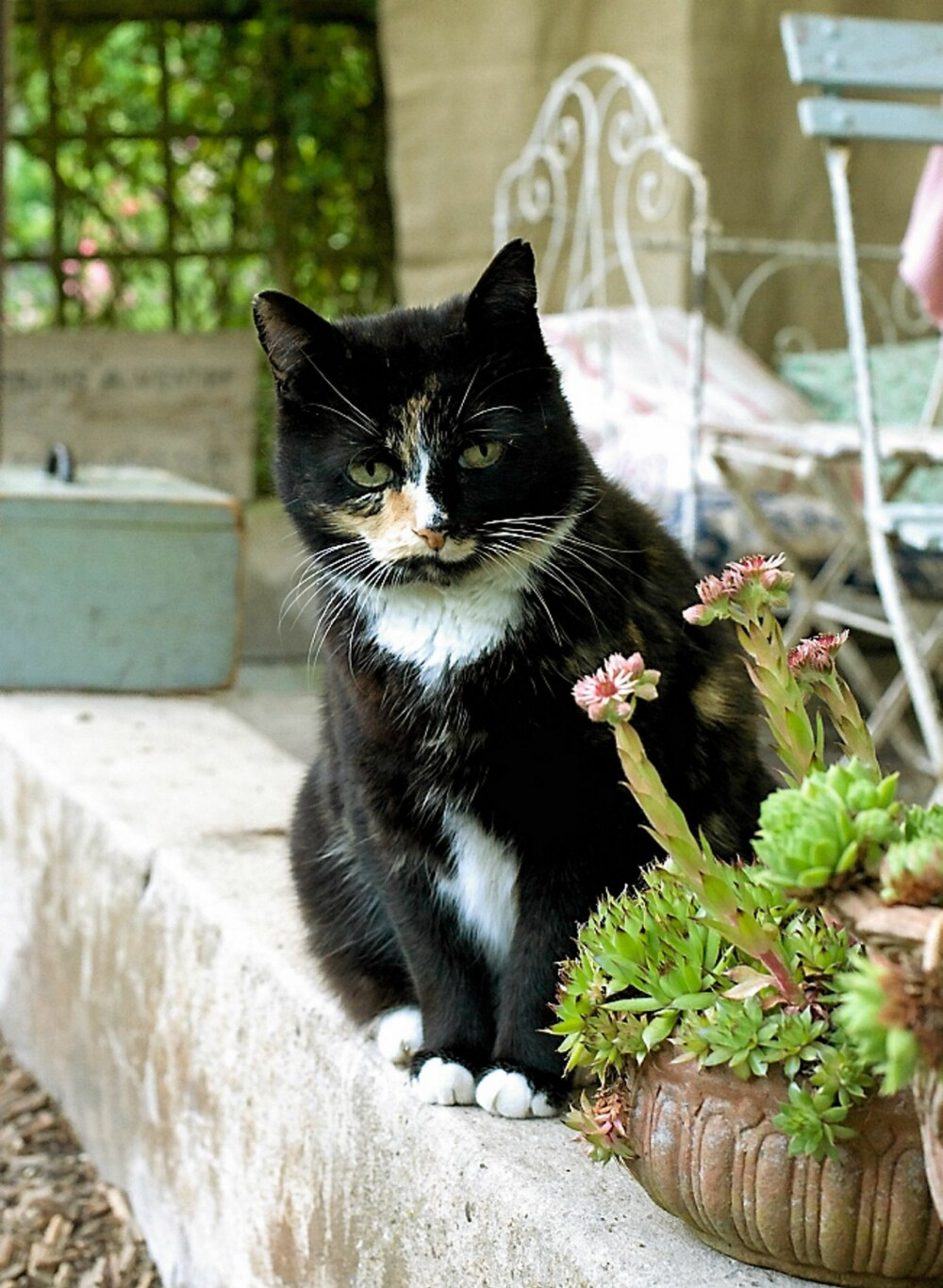 LAT KATT: Blir hagehjørnet ditt for hyggelig, flytter nok naboens katt inn for godt.