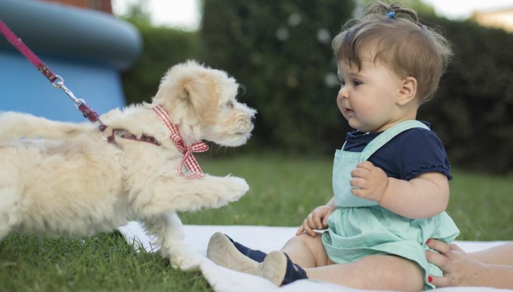 HA KONTROLL: Når barnet og hunden møtes for første gang er det viktig at du har kontroll på situasjonen og følger med.