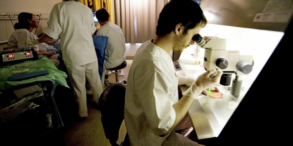EGG UNDER LUPEN: Laborant Garreth Greggains tar imot Lenes eggposer under mikroskopet etter hvert som de hentes ut.