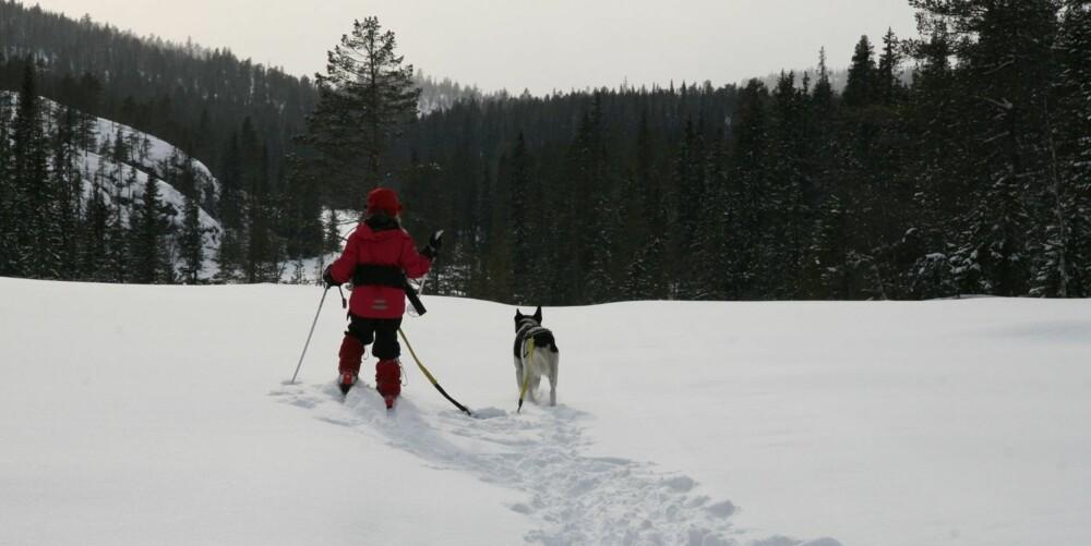 SKITUR: Dina (6) og hunden Polly i fullt fart gjennom Trillemarka.